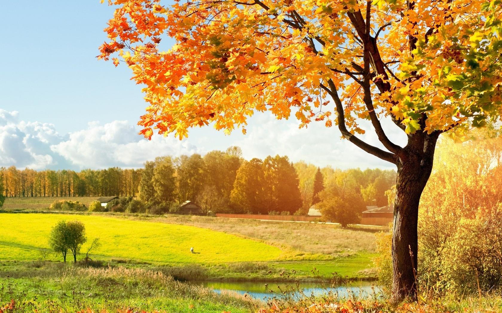 картинки для обоев осень