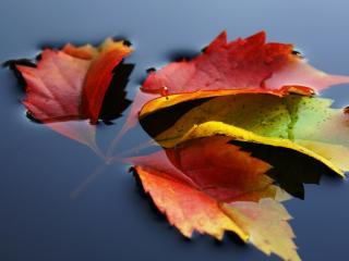 Листья в воде