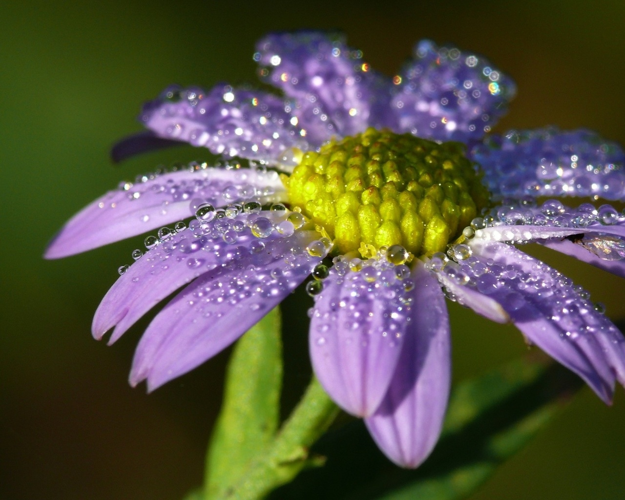 Фото цветок крупно с каплями