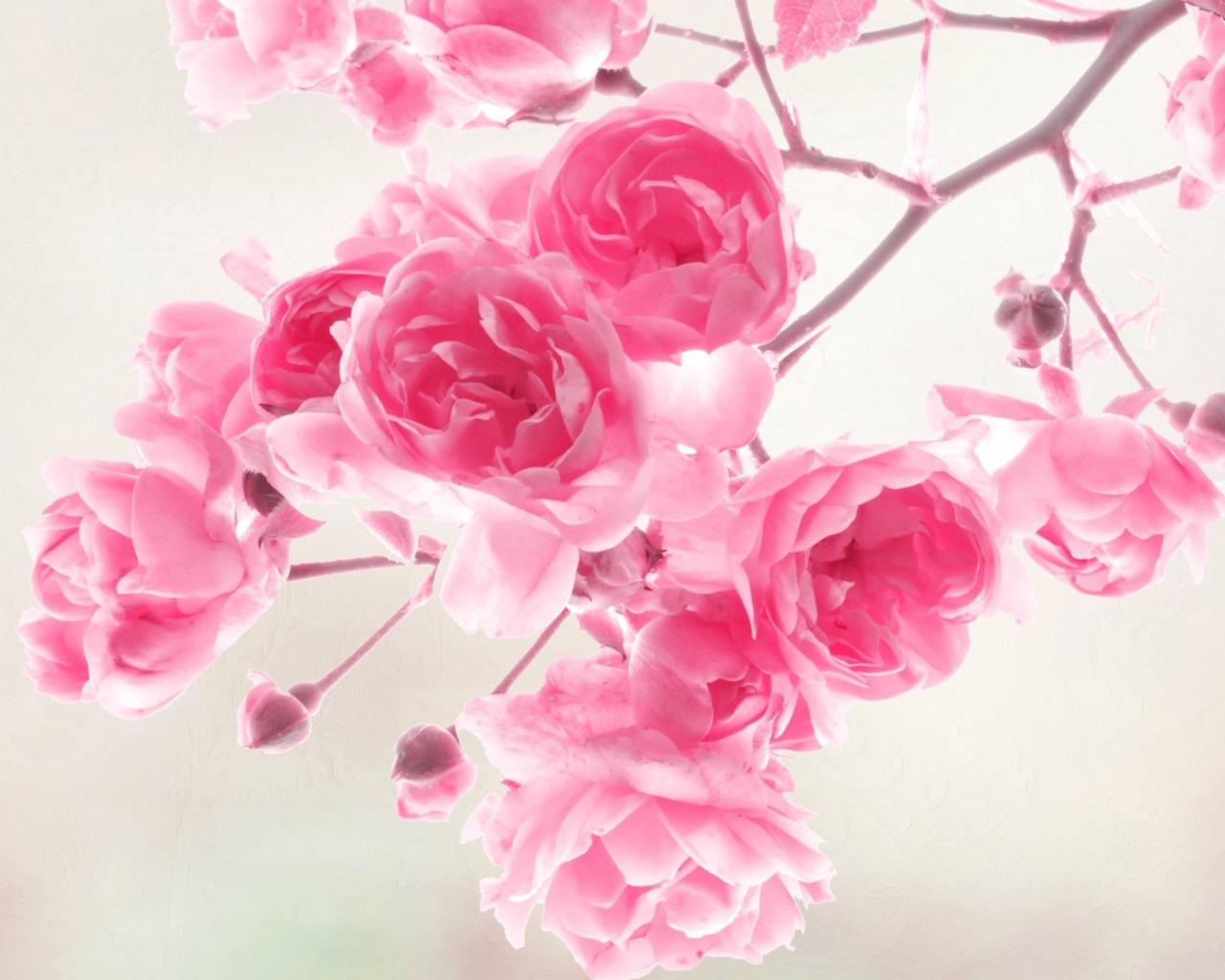 обои для раб стола розовые розы № 583769 загрузить