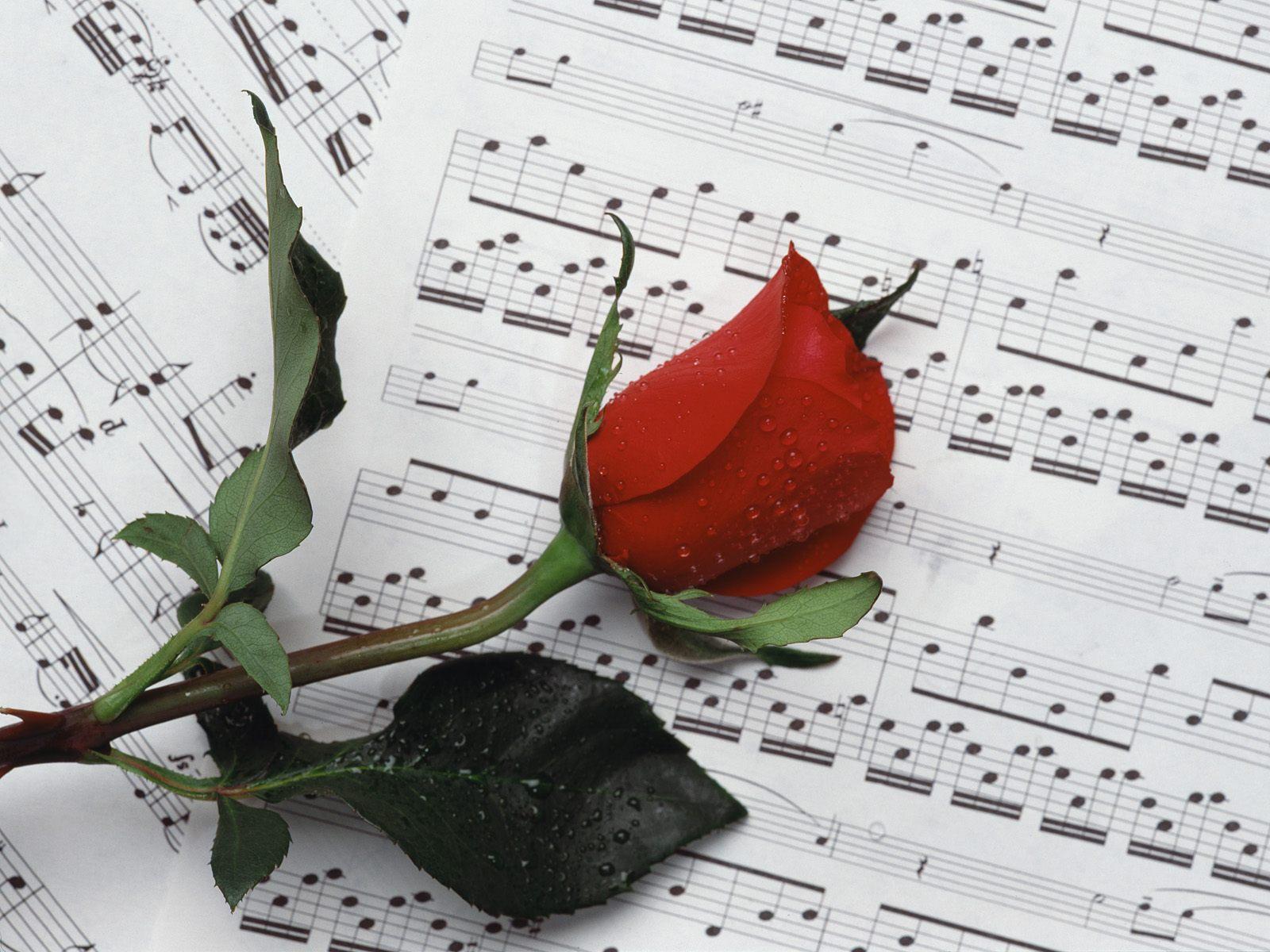Цветок музыка любви фото