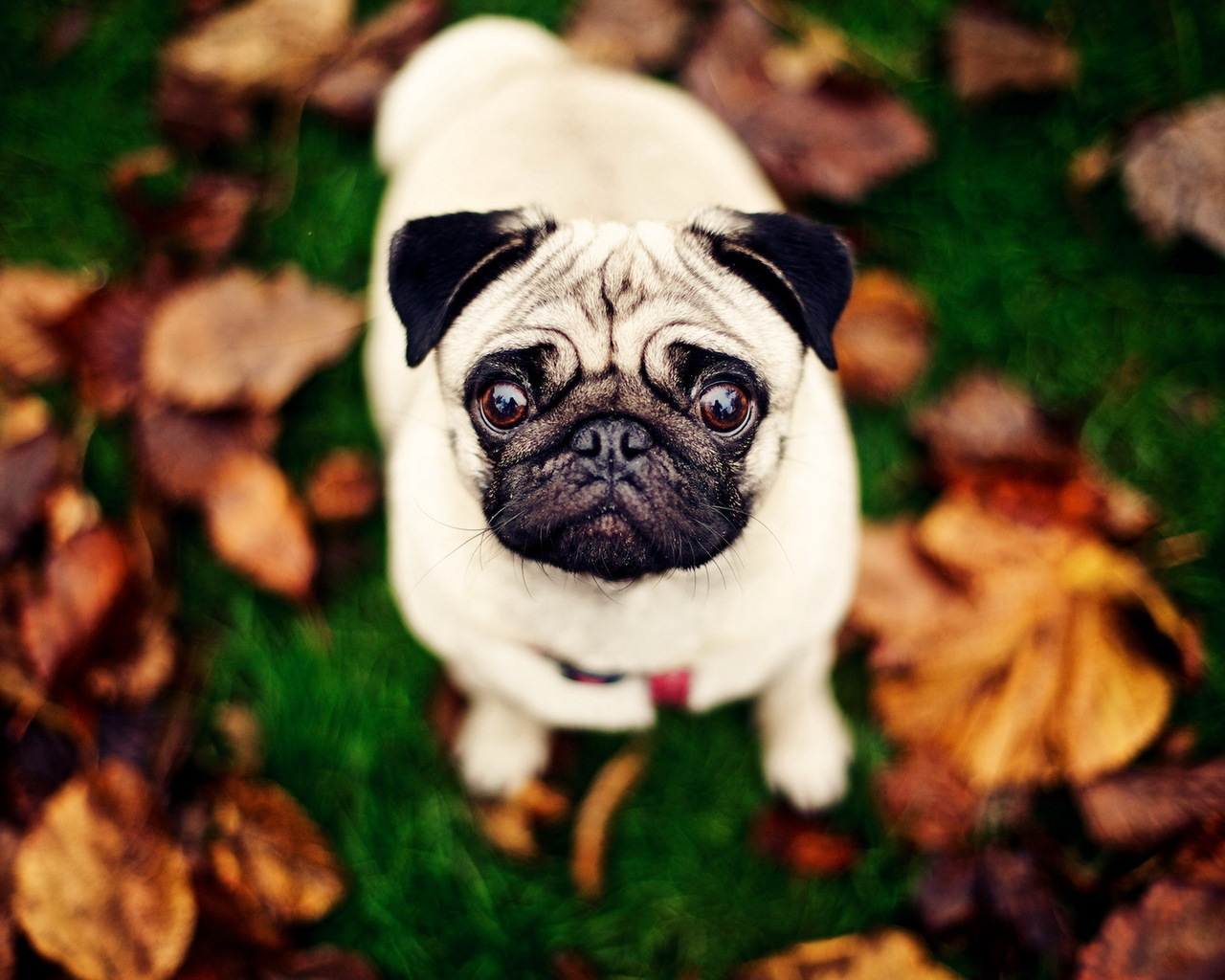 Крутые картинки собаки