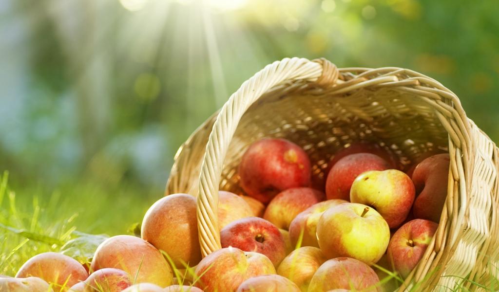 обои на рабочий стол овощи фрукты осень 15501
