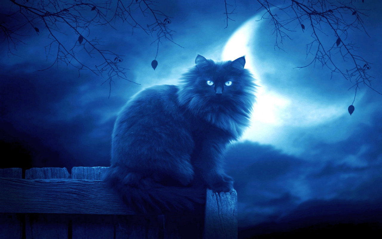 луна кот обои на рабочий стол № 573603 без смс