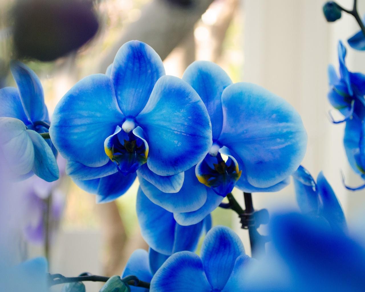 Обои на раб стол с орхидеей