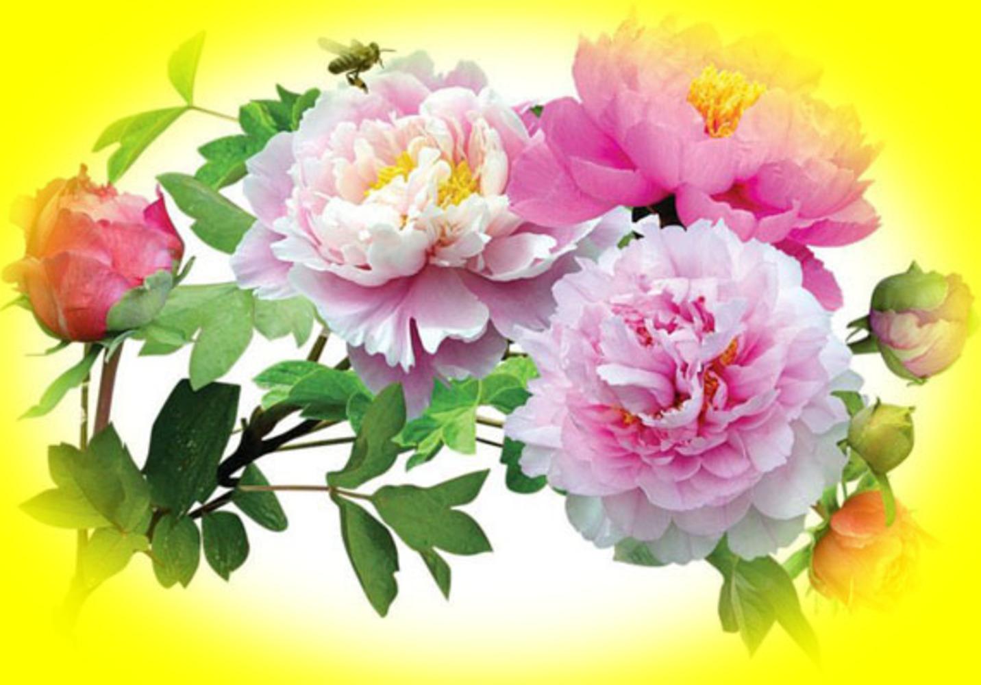 Чудесные цветы фото