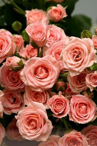 обои на айфон 5s цветы № 56775 без смс