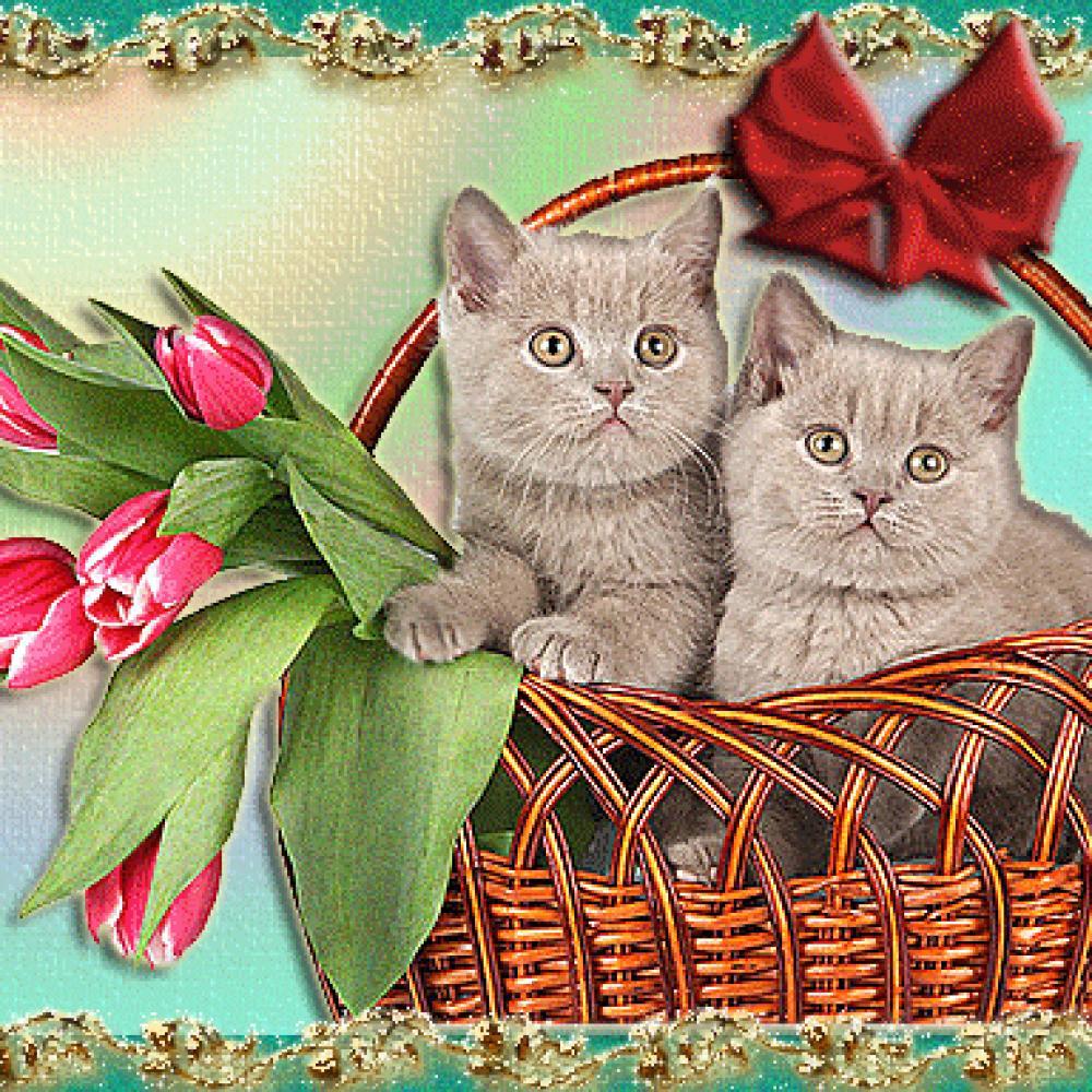 Открытки пожелания с котятами