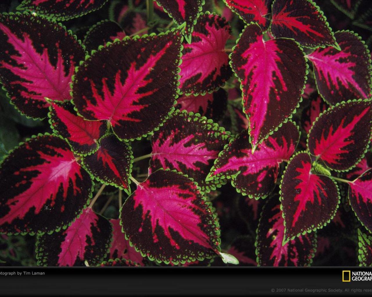 занятий спортом растения с красными листьями того