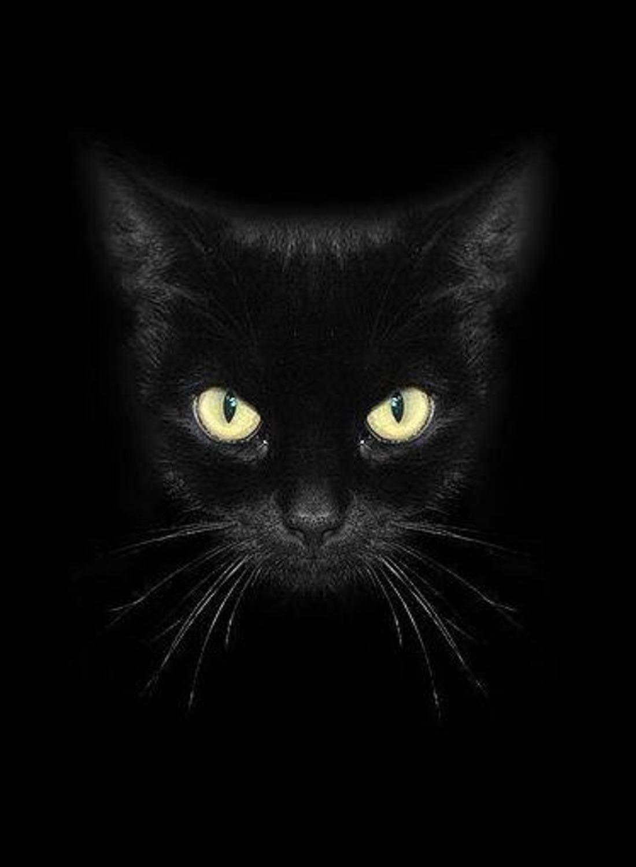 Фото на аву чёрные кошки