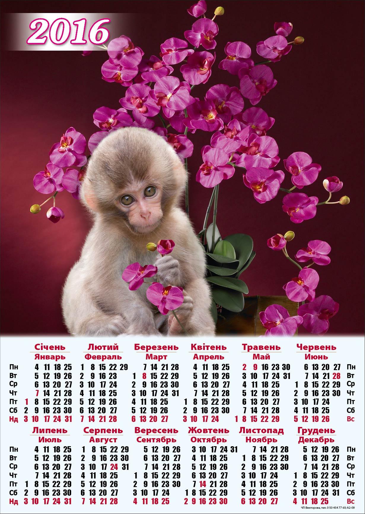 картинки на календарь 2016