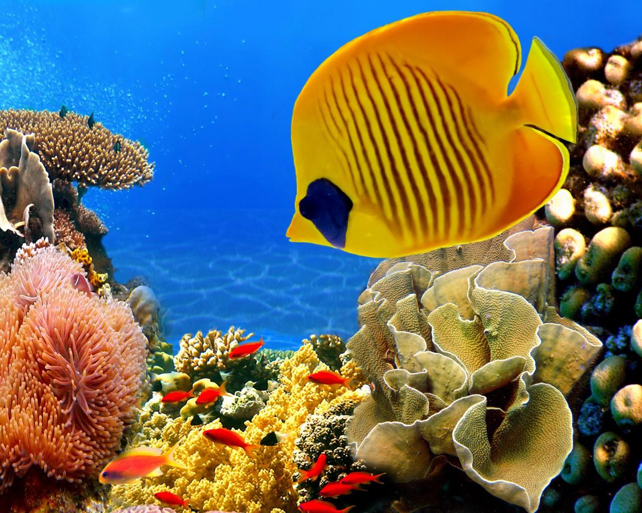 3d обои подводный мир на рабочий стол