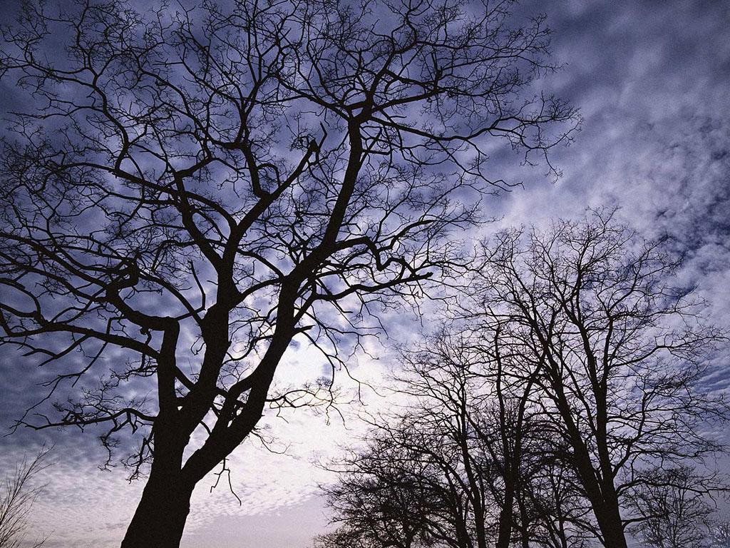 Обнаженные Деревья
