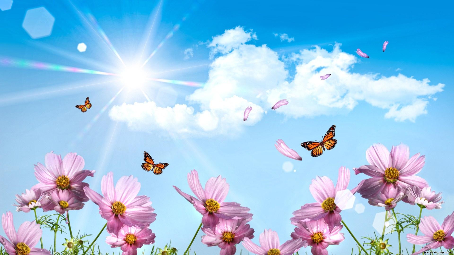 бабочки в цветах обои на рабочий стол