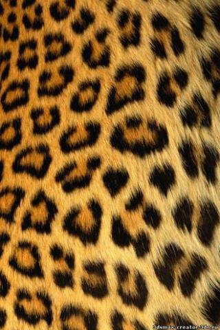 леопард обои на телефон № 190696 загрузить