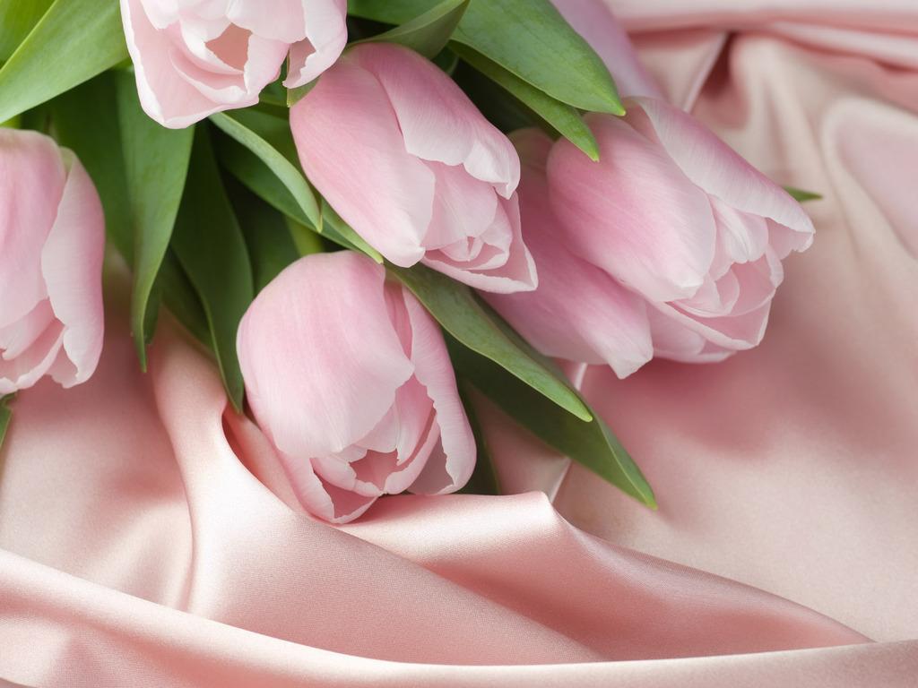 красивые фото розы на рабочий стол