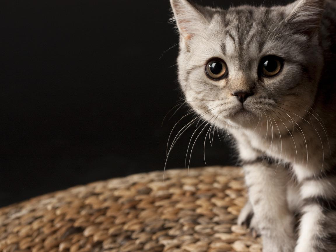 картинки на рабочий стол-котенок
