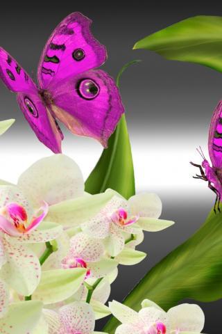 Обои на рабочий стол компьютера орхидеи