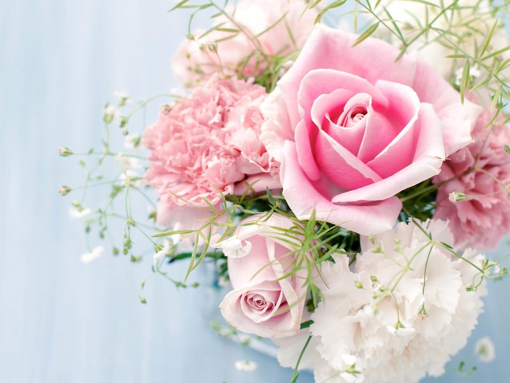 Обои на рабочий стол широкоформатные цветы розы