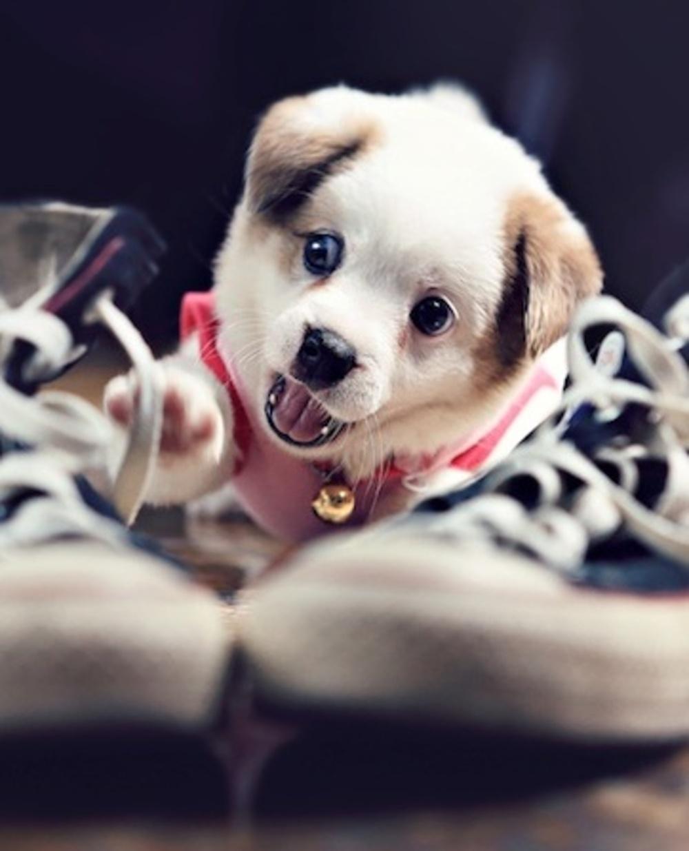 Фото щенков самые смешные