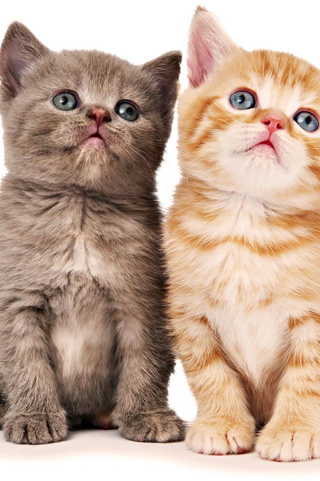 Скачать обои котята на планшет 4