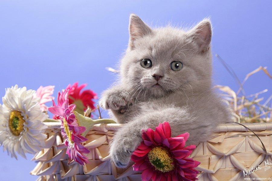 Открытка с котом и цветами 73