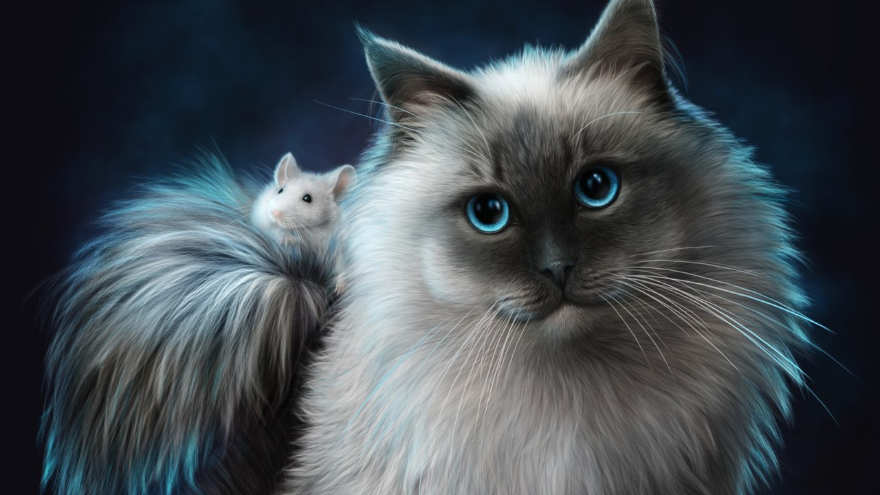 бирманская кошка обои на рабочий стол № 539400  скачать