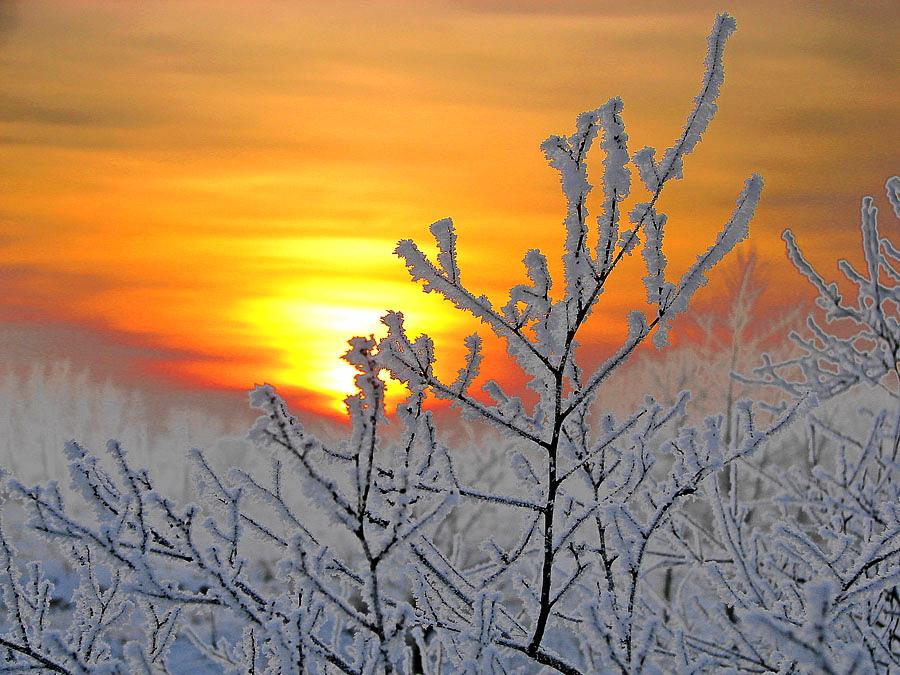 Зимнее Солнце Скачать Торрент - фото 3