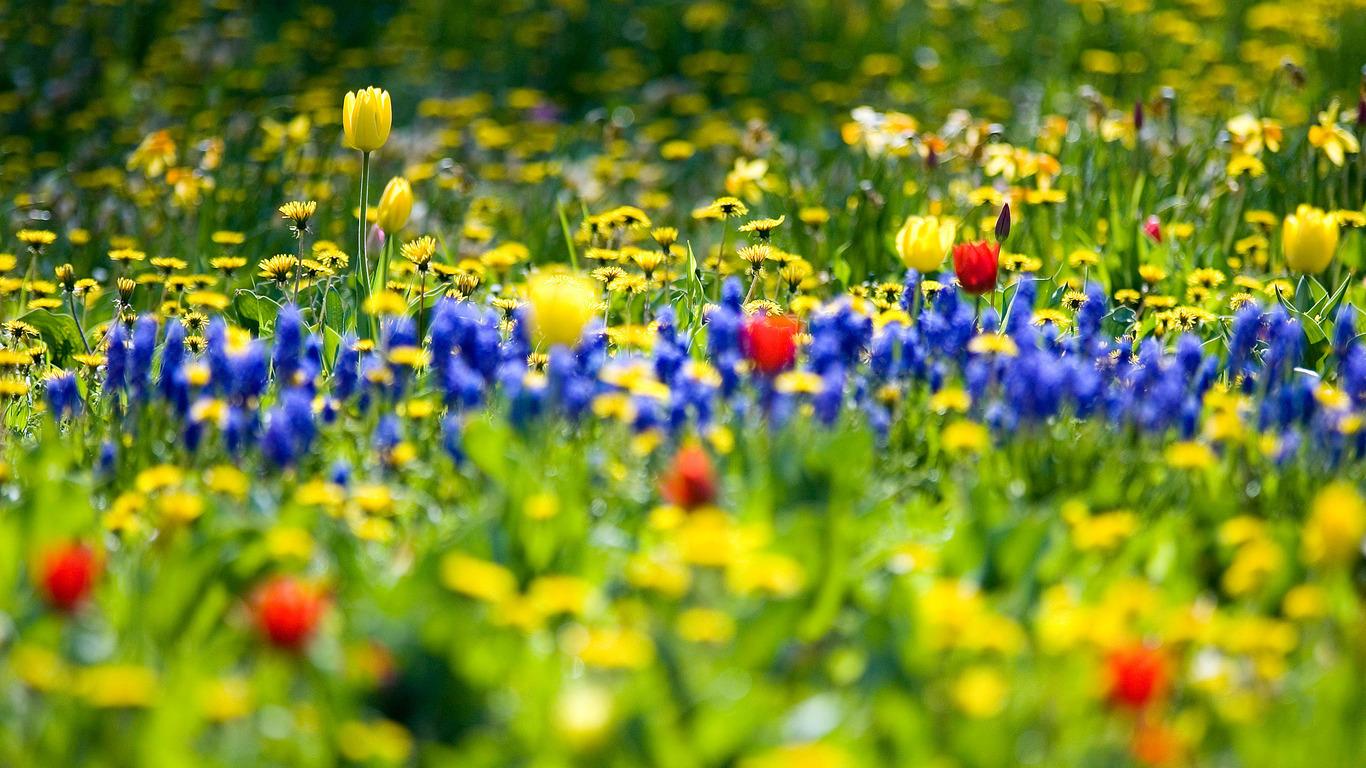 Заставки на рабочий стол цветы полевые