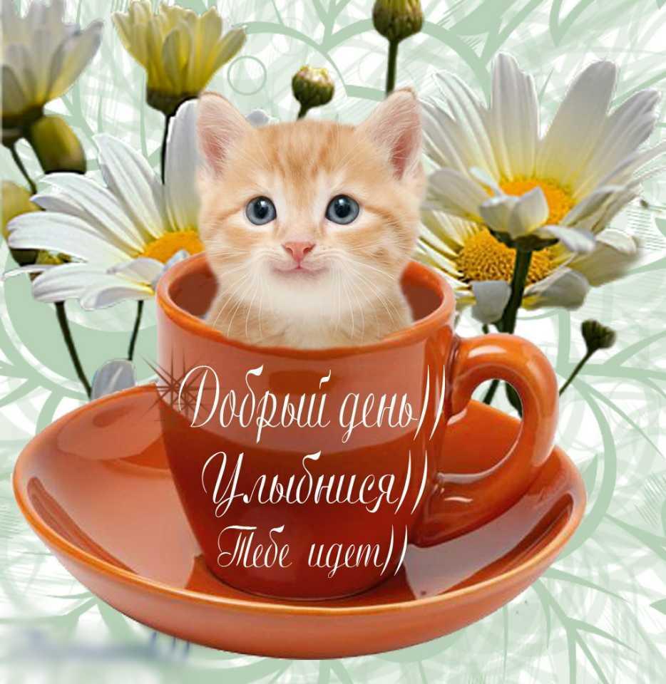 http://www.mobilmusic.ru/mfile/79/94/9a/1312951.jpg