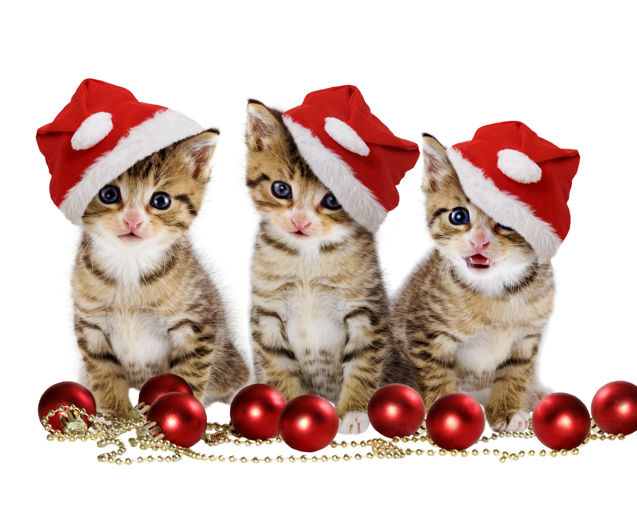Kitten wallpaper wallpapers for free download about 3011
