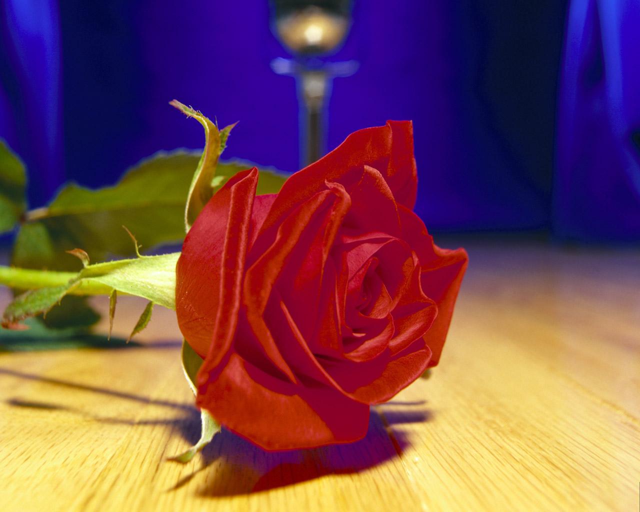 Фото цветы розы анимация красивые
