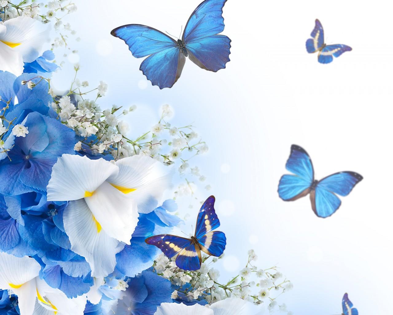 Бабочка картинка для открытки 2