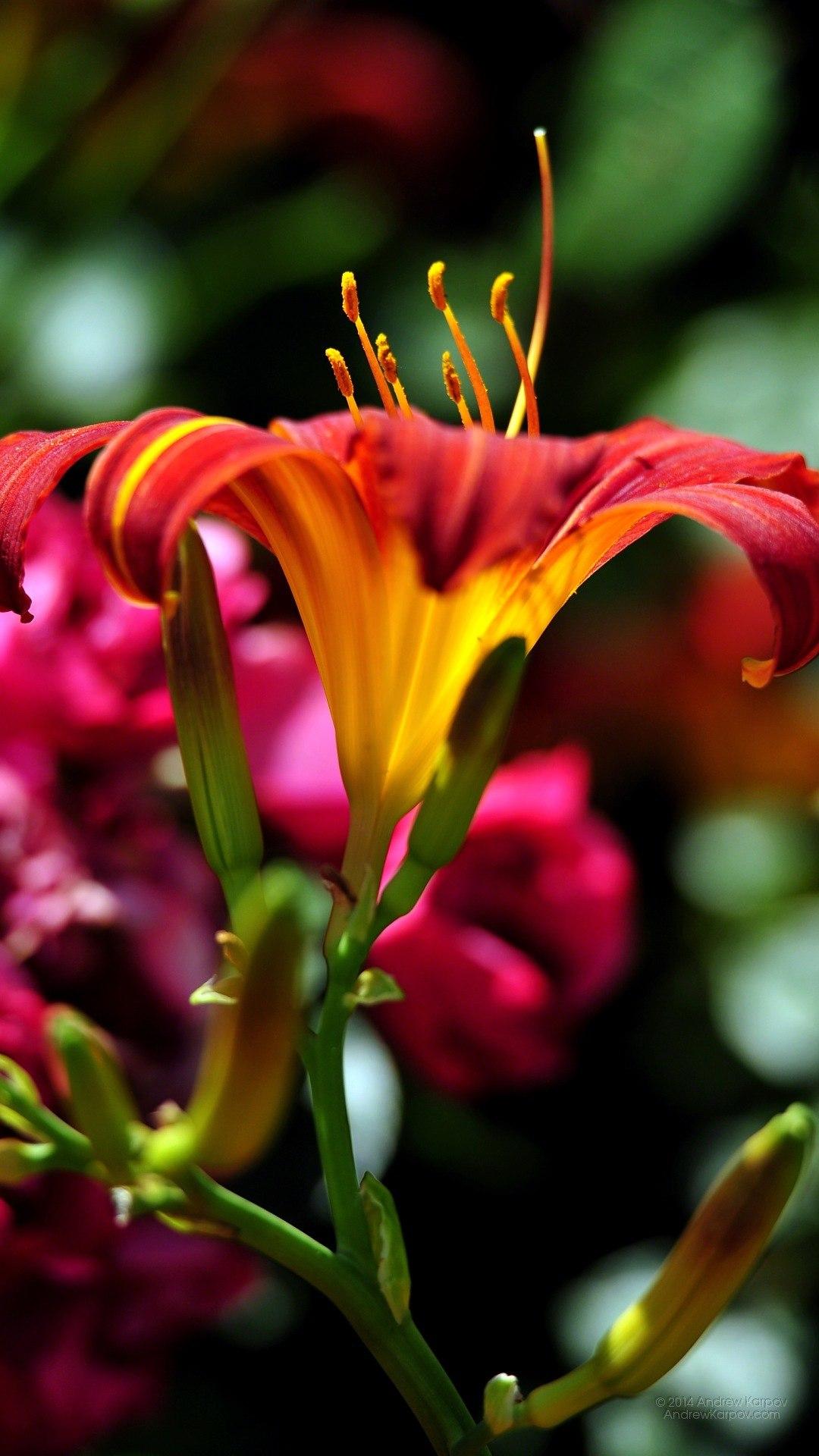 Фото цветов для смартфона