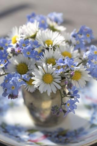Полевые нежные цветы