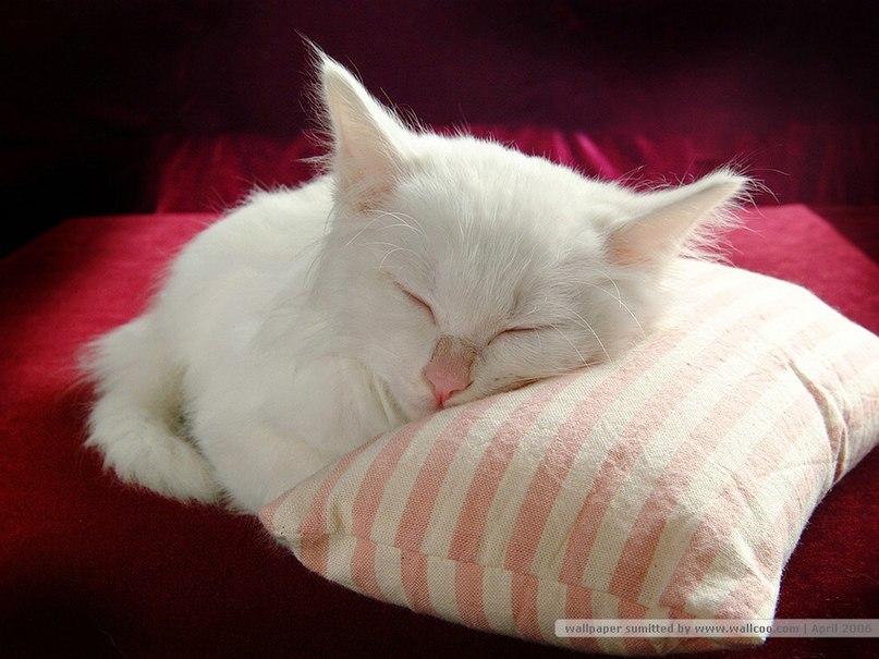 этом красный котенок во сне заместитель Губернатора Курганской