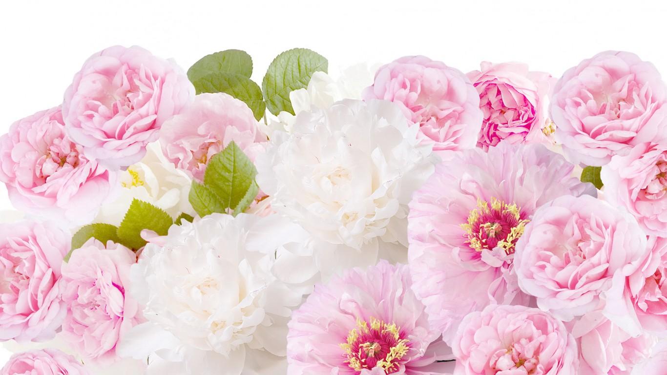 обои для рабочего стола пионы розы № 422791 бесплатно