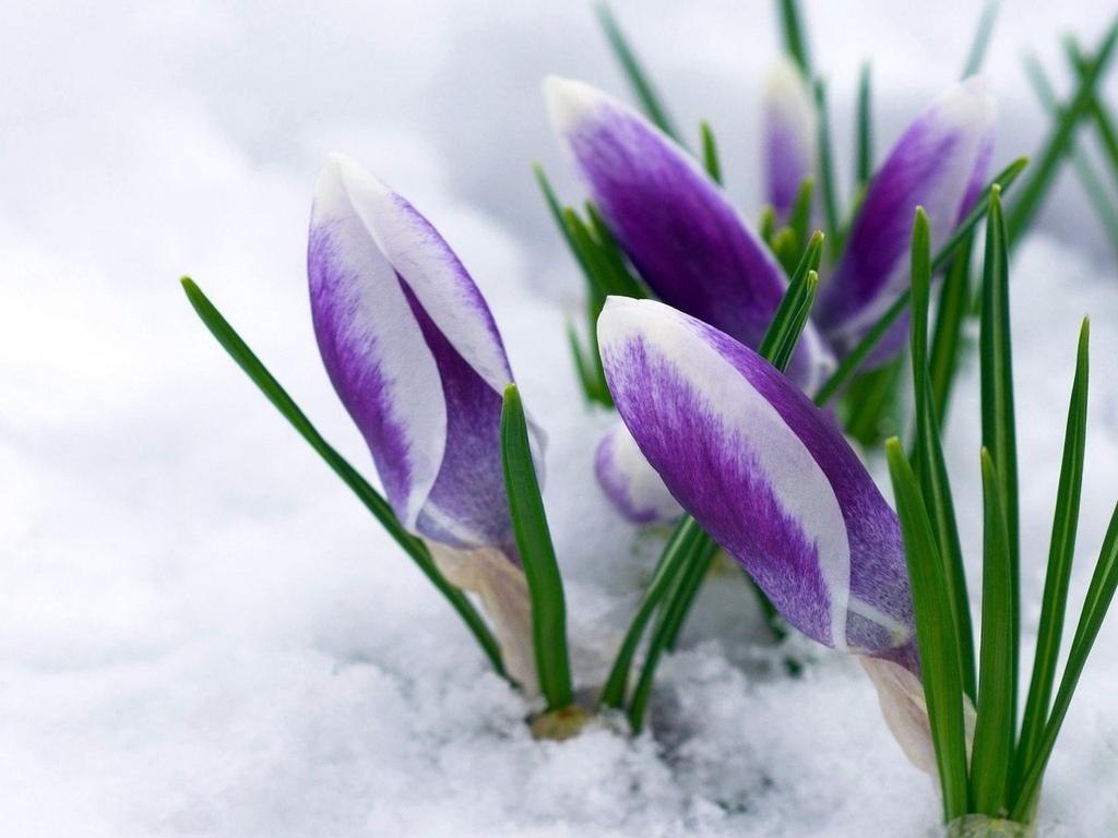 С первым снегом картинки с поздравления с фото 651