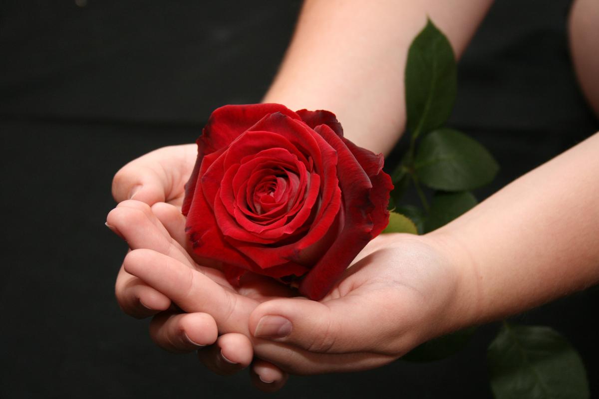 Каждую не подаренную розу