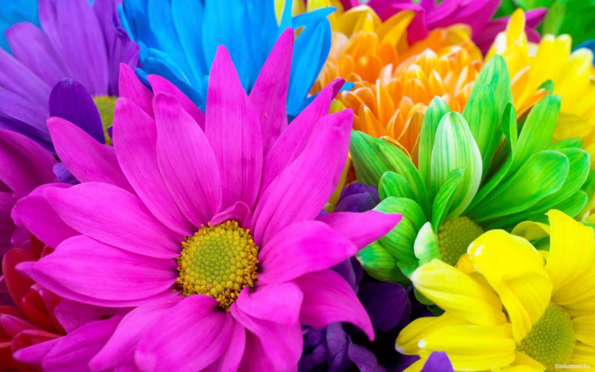 Цветы картинки разноцветные