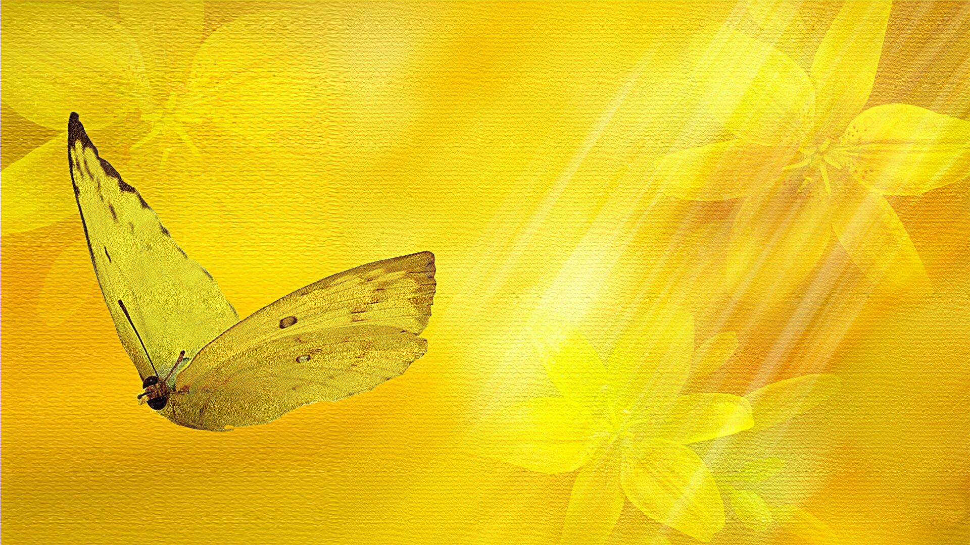 Обои на рабочий стол желтые бабочки