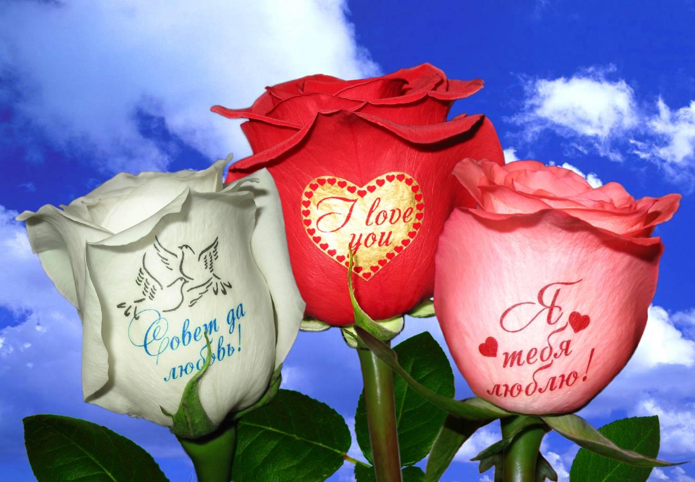 Надписи и фото на цветах