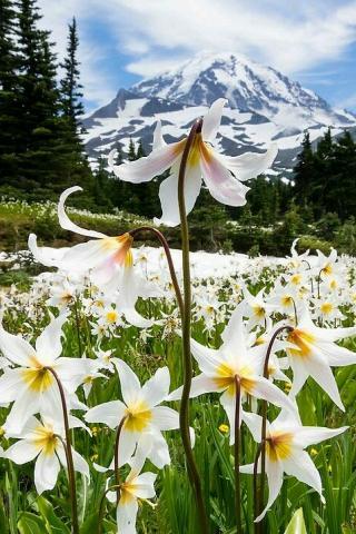 Пейзаж цветы