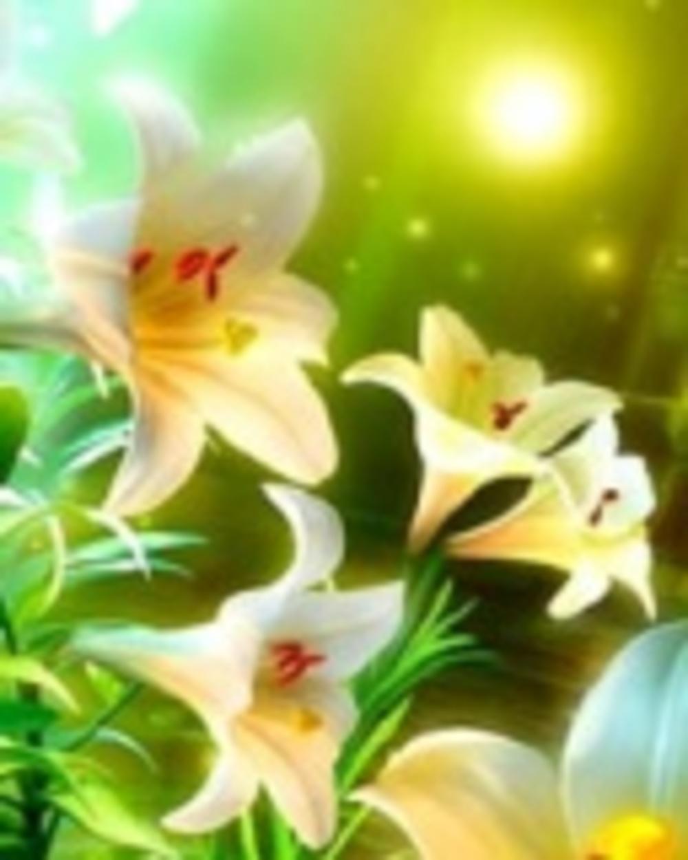 Имя цветок и фото