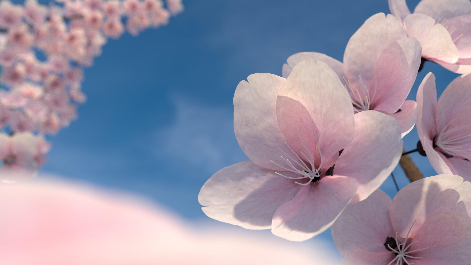 цветы в день рождения обои на рабочий стол