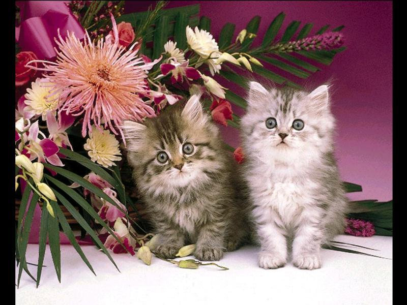 Открытки котят для девушки 458