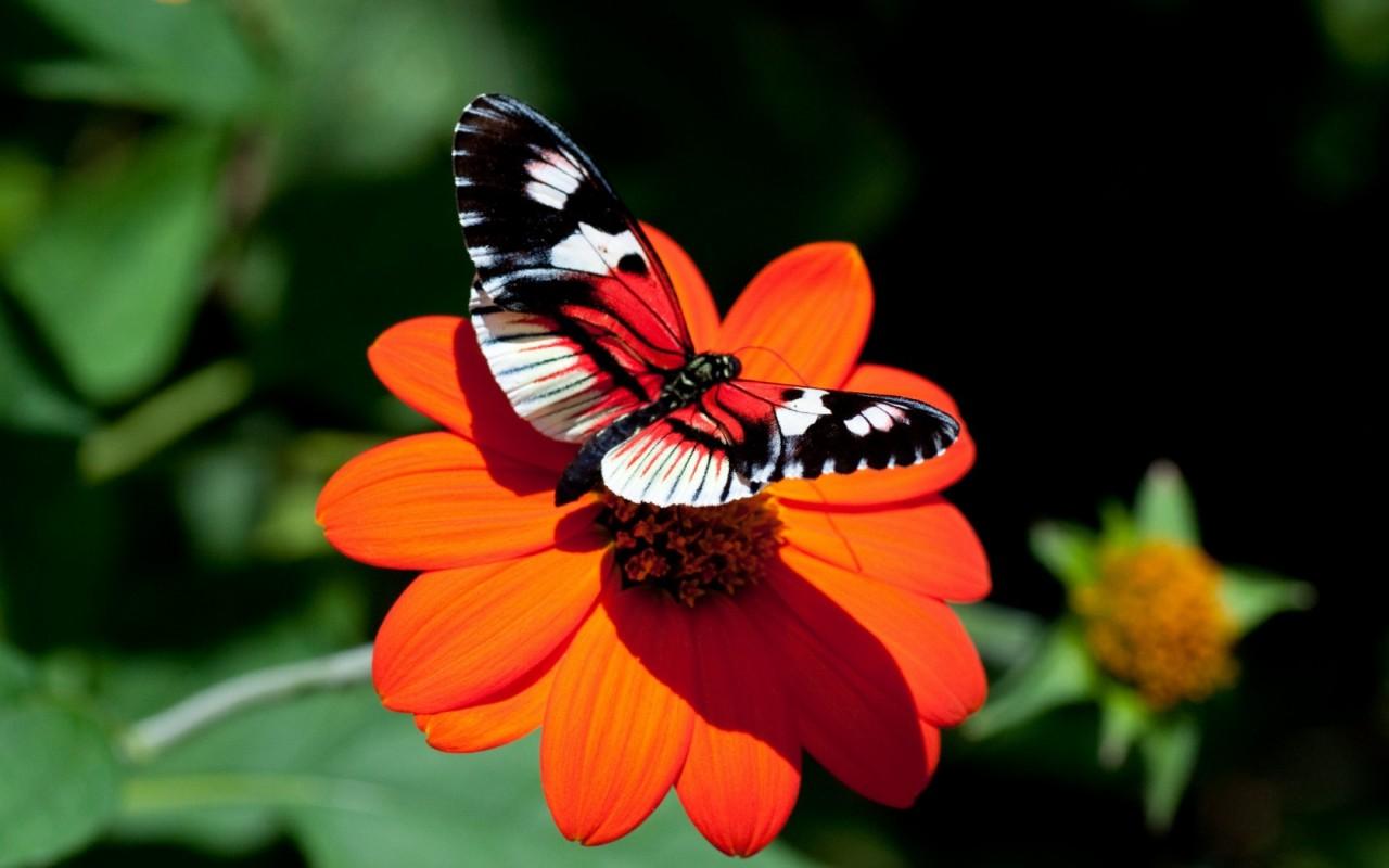 картинки бабочек для рабочего стола