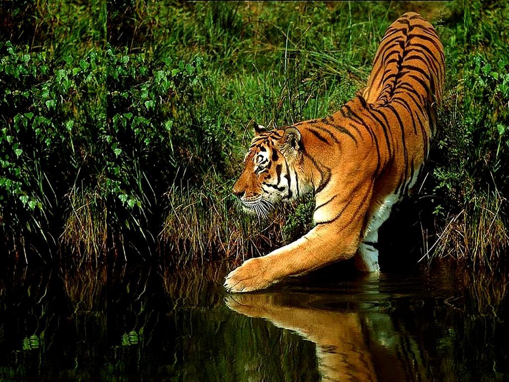 крадущийся тигр скачать торрент