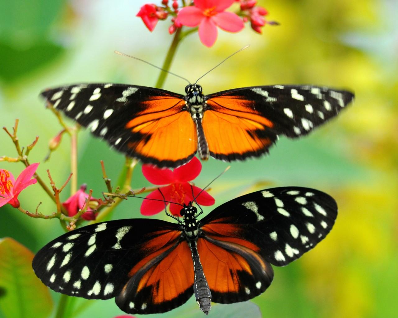 Cantiknya Kupu Kupu di Antara Bunga yang Indah