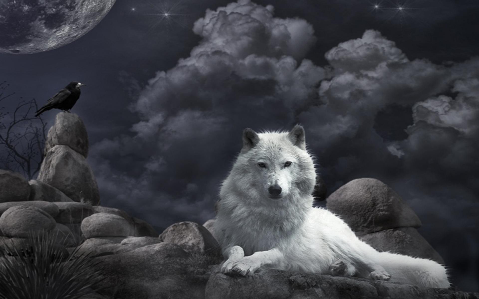 волк картинки на рабочий стол
